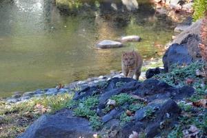 Tokyo Park Cat on Patrol
