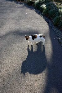 Tokyo Park Cat Sakura-chan and Her Shadow