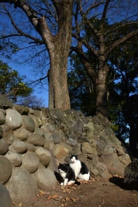 Cats at Sunny and Warm Place