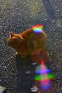 Tokyo Park Cat and Rainbow Flare
