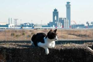Cat and Haneda Airport