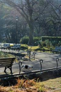 Tokyo Park Scene