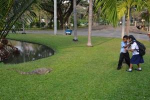 Monitor Lizard and School Children, Bangkok