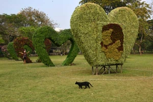 Thai Cat and We-Love-The-King installation, Bangkok