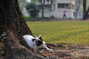 Thai Cat Napping, Bangkok