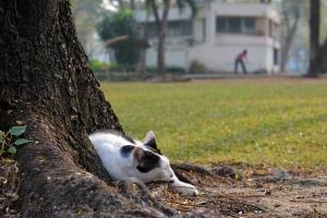 Thai Cat Napping, Bangkok