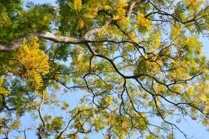 Autumn Tree, Bangkok