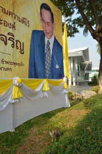The King of Thailand and Cat (very small)