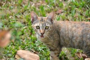 Thai Cat, Bangkok
