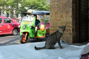 Thai Cat, Tuk-tuk, Chinatown, Bangkok