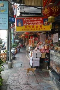 Thai Cat in Chinatown, Bangkok