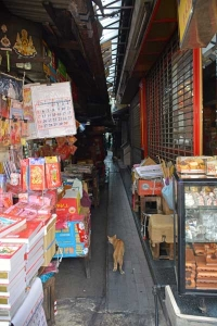Alley Cat in Chinatown, Bangkok