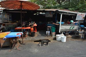 Thai Cat in Soi Charoen Krung