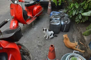 Thai Cats in Soi Charoen Krung, Bangkok