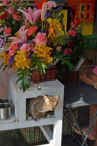 Thai Cat, Silom Rd, Bangkok