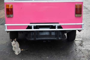 Thai Cat and Pink Tuk-tuk