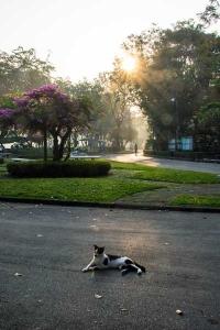 Thai Cat, Bangkok Thailand