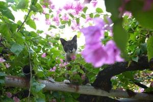 Thai Cat up in a Tree, Bangkok Thailand