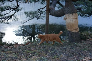 Park Cat and Frozen Pond, Tokyo Japan