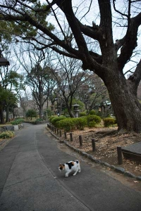 Park Cat and Winter Ginkgo Tree, Tokyo Japan