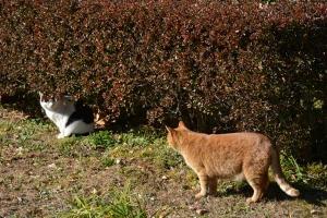 Park Cats, Tokyo Japan