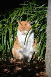 Park Cat In Meditation, Tokyo Japan