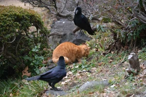 Park Cats and Crow, Tokyo Japan