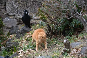 Park Cat and Crow, Tokyo Japan
