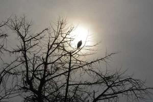 A Bird On a Ginkgo Tree, January, Tokyo