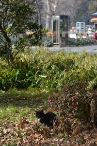 Park Cat and Phone Booth, Tokyo Japan