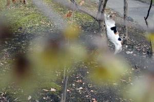 Park Cat, Tokyo Japan