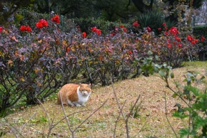Park Cat and Yellow Pansies, Tokyo Japan
