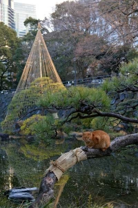 Park Cat Sitting On The Pine Tree, Tokyo Japan