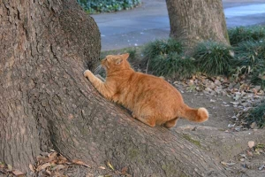 Park Cat Scratching The Tree, Tokyo Japan