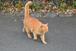 Park Cat with Tail Up, Tokyo Japan