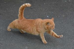 Park Cat Stretching, Tokyo Japan