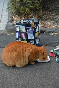 Park Cat Having Breakfast, Tokyo Japan