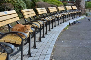 Park Cat On The Bench, Tokyo Japan
