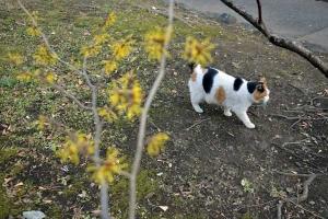 Park Cat and Witch Hazel, Tokyo Japan
