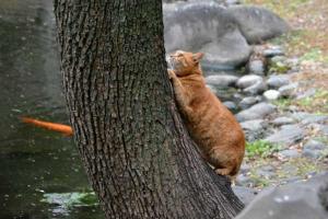 Park Cat and Koi, Tokyo Japan