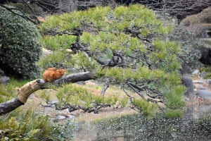 Park Cat On Pine Tree