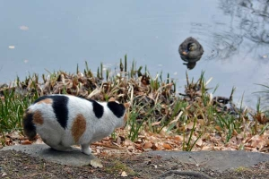 Park Cat and Duck, Tokyo Japan