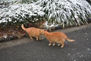 雪猫 Snow Cats, Tokyo Japan