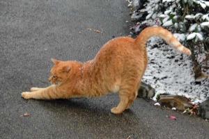 雪猫 Snow Cat, Tokyo Japan