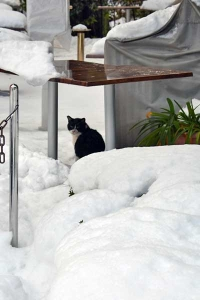 雪猫 A Black and White Cat In The Snow