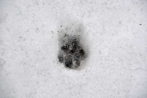 Animal's Footprint