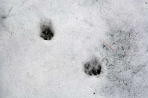 Animal's Footprints
