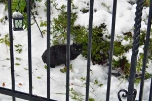 Black Cat and Snow
