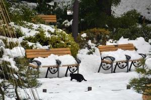 雪猫 Black Cat In The Snow, Tokyo