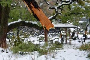 Snow Chaos, Tokyo Japan